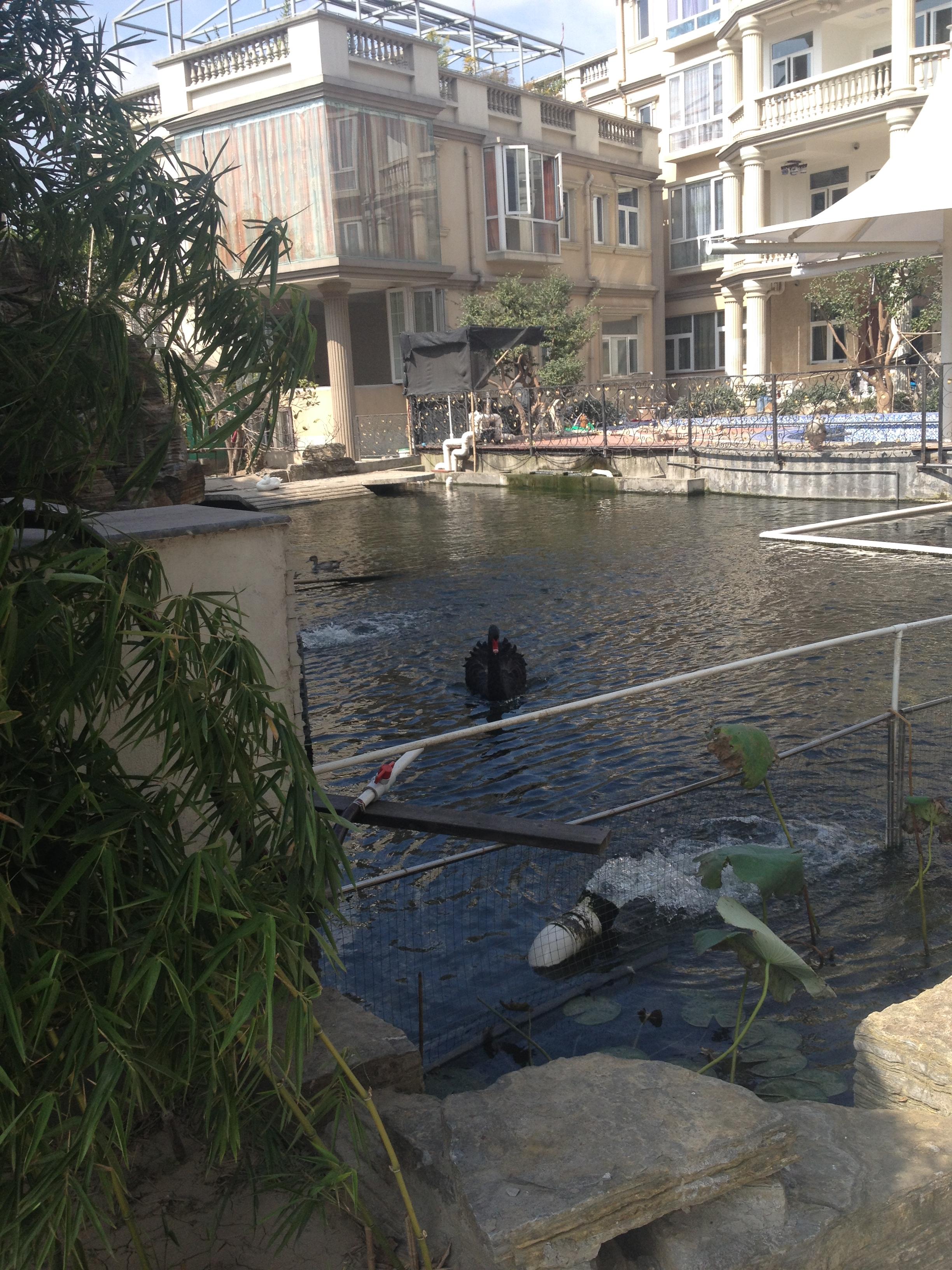 景观渔塘过滤后效果