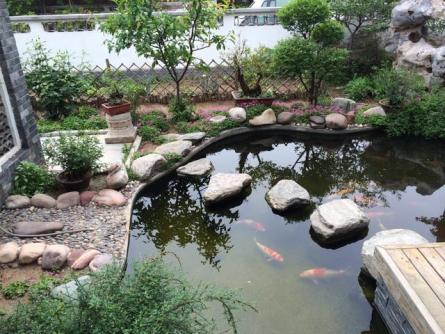 锦鲤鱼池的建设